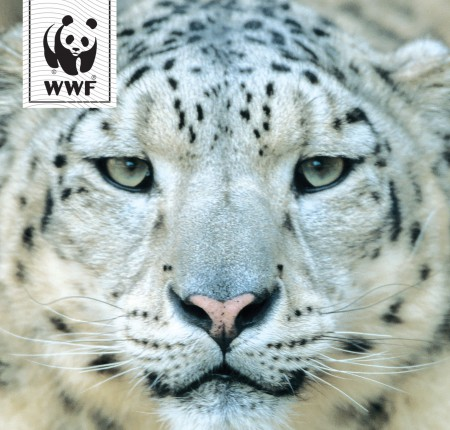 WWF Appeals